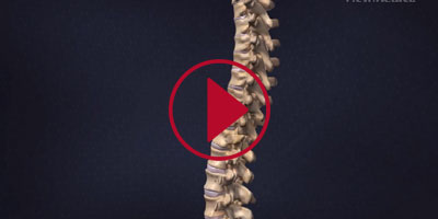 SPINE-ANATOMY