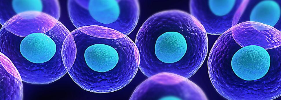 stem-cell-prp